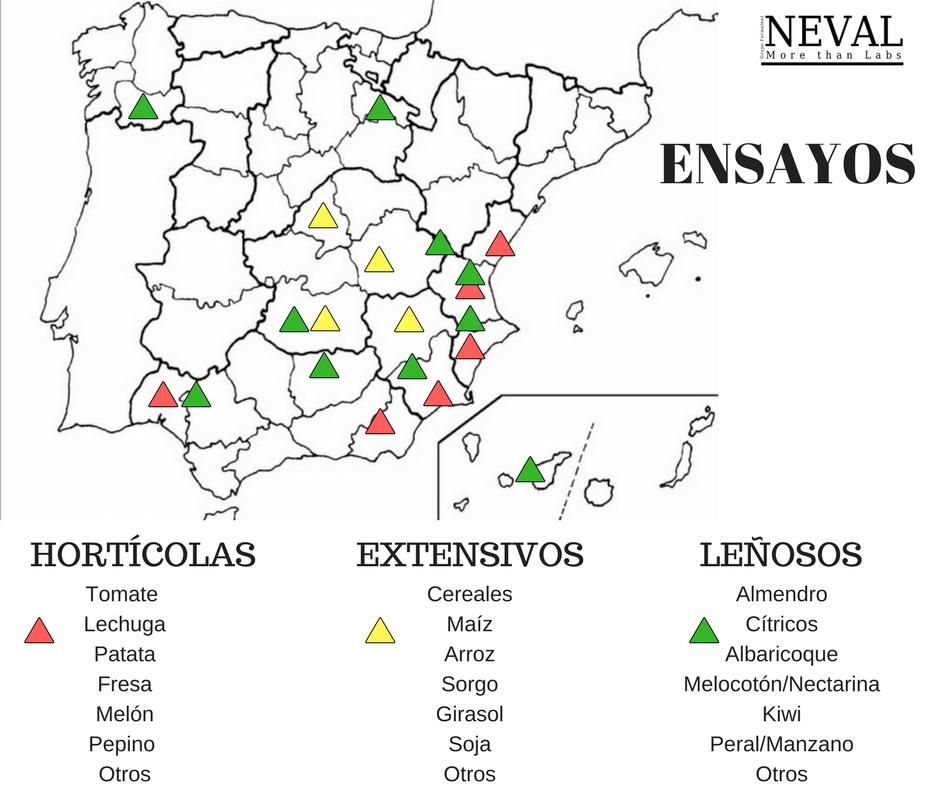 ENSAYOS EFICACIA CAMPO LABORATORIO