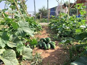 bioestimulante agricola