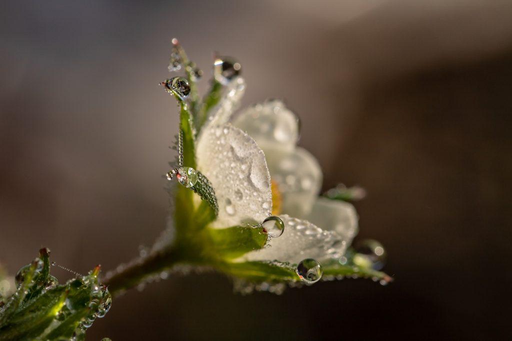 fertilizantes fresas