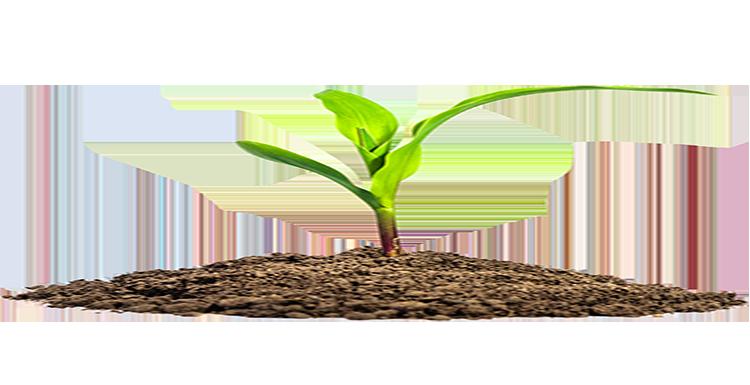 tipos fertilizantes