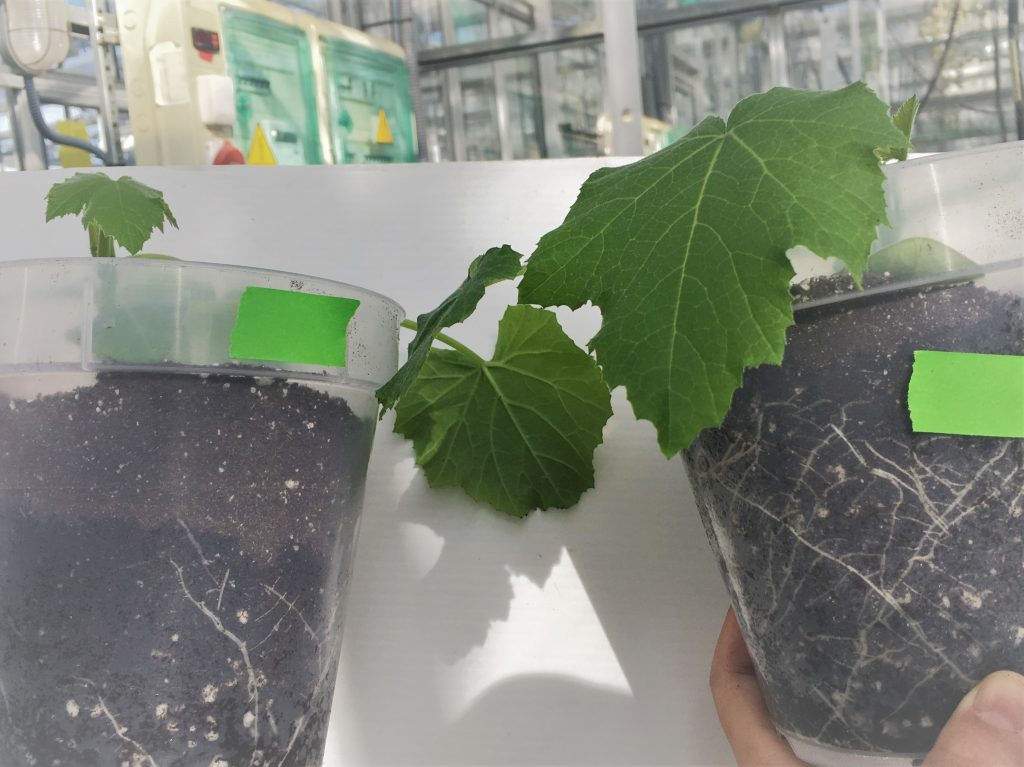 efecto de fertilizantes