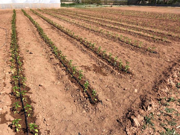 Registro fertilizantes y bioestimulantes Finca Experimental Neval