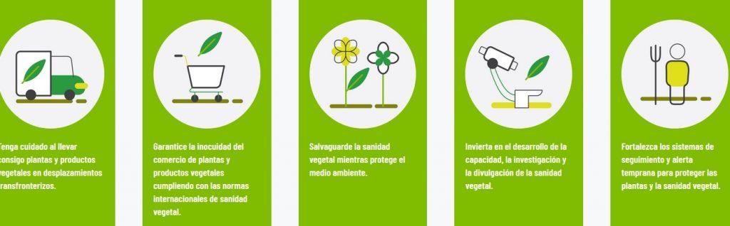 año internacional sanidad vegetal 2020