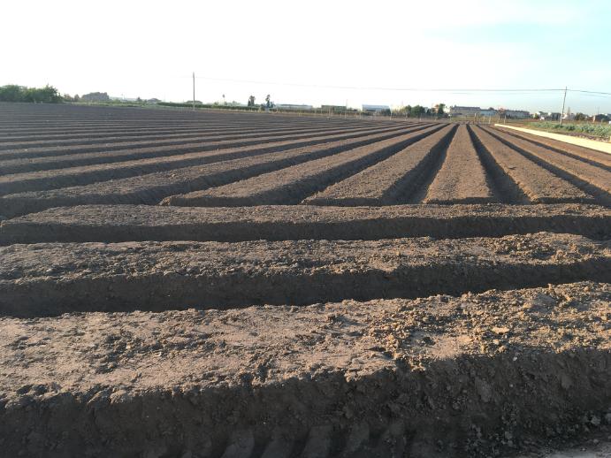 Nematodos suelo toma de muestras