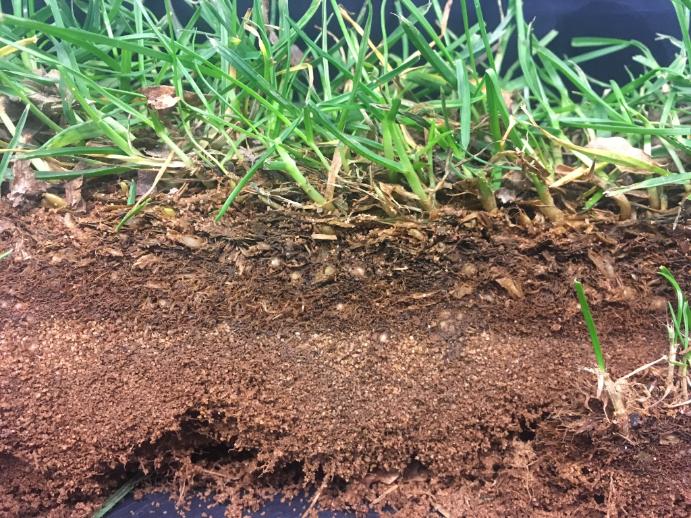 Análisis de tepes de césped nematodos y hongos