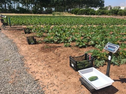 Registro fertilizantes eficiencia agronómica