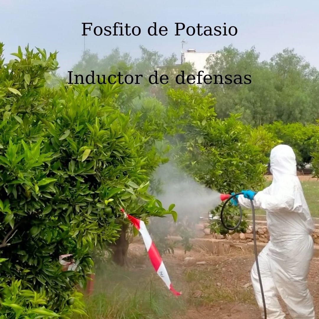 Fosfito de Potasio